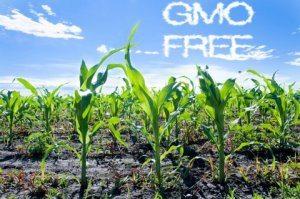 GMO testing lab